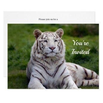 Beautiful White Tiger Photo Birthday Invitation