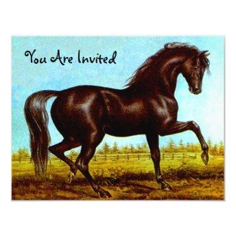 Black Beauty Horse Party Invitation Any Occasion